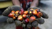 Malaysia Refutes Singapore University Report on Health Risks of Palm Oil
