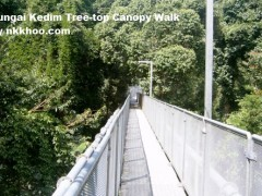 sungai kedim tree top canopy walk