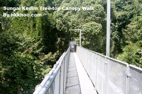 'Canopy walk' provides breathtaking views of Ghana's rain forest