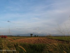 sawah ring 2012 1x