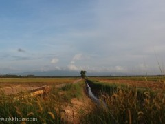 sawah ring 2012 2x