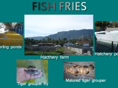 FISHFRIES.21671309_std