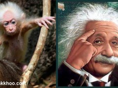 einstein-monkey
