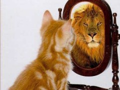 kitten-looking-in-mirror-seeing-a-lion