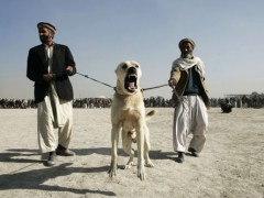 dog for Muslims